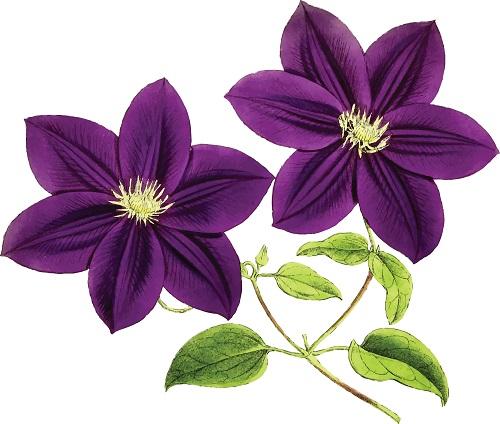 Пулково цветы мелкий оптом 10